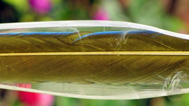 Mind-Factor Focus - unverbautes Griffstück mit einer blau-gelben Papageienfeder_3